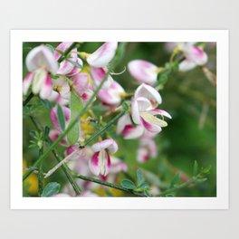 Pink and White Botanical  Art Print