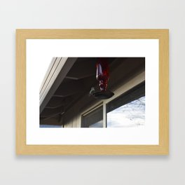Sitting Hummingbird Framed Art Print