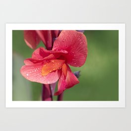 Canna Lily Tropical Macro #2 Art Print