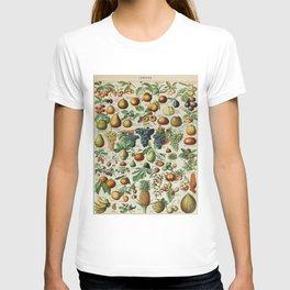 Fruits Vintage Scientific Illustration French Language Encyclopedia Lithographs Educational T-shirt