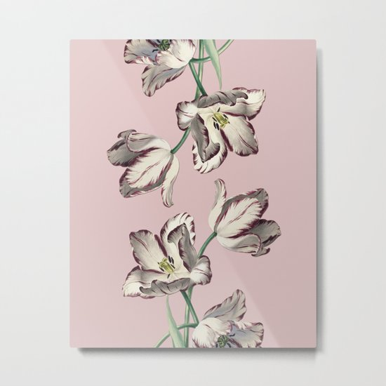 Spring Tulipa Metal Print