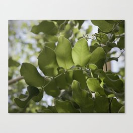 Light And Leaves Canvas Print