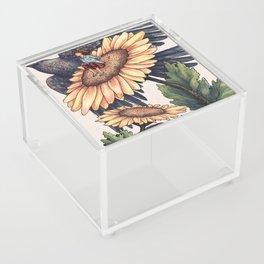 Soar Acrylic Box