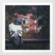 Pigeon of Barcelona Art Print
