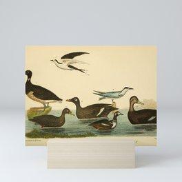 Brant, Scoter Duck, Velvet Duck, Harlequin Duck, Dusky Duck, Marsh Fern, Sooty Fern7 Mini Art Print