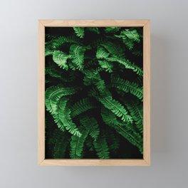 Lady Fern Framed Mini Art Print