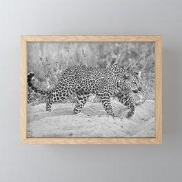 Prowl Framed Mini Art Print