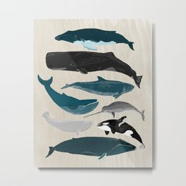 Whales - Pod of Whales Print by Andrea Lauren Metal Print