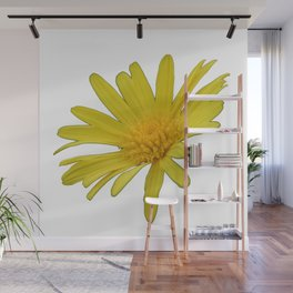 Yellow Daisy Flower Isolated Wall Mural