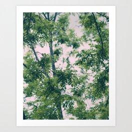 Spring Tree Branches Art Print