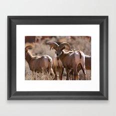 Desert Big Horn Framed Art Print
