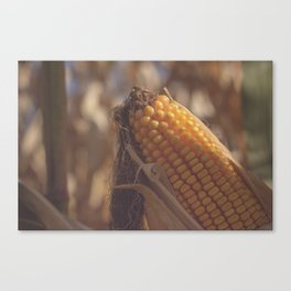 Corn Maize Canvas Print
