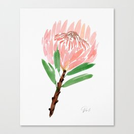 King Protea in Blush Pink Canvas Print