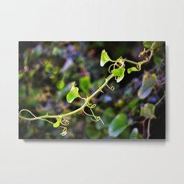 Curlicue Vine with Thorns Metal Print