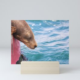 California Sea Lion Mini Art Print