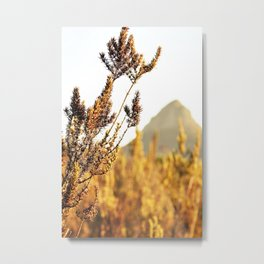 Sunset dust Metal Print