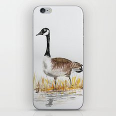 Bernache du Canada (Canada Goose) iPhone & iPod Skin