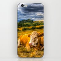 cows iPhone & iPod Skins featuring Resting Cows by David Pyatt