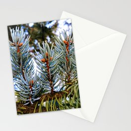 Blue Spruce Spring Growth 2 Stationery Cards