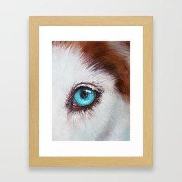 Husky's eye Framed Art Print
