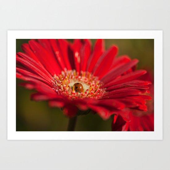 The Gerbera and the Ladybird Art Print