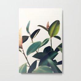 Ficus Elastica #8 Metal Print