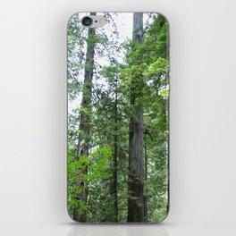 California forest iPhone Skin