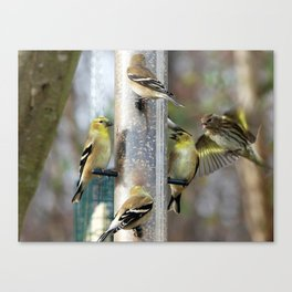 Goldfinches at the Feeder Canvas Print