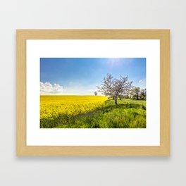 Yellow oilseed rape field under the blue sky with sun Framed Art Print