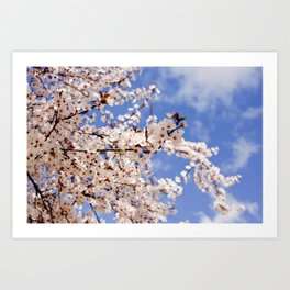 Spring has sprung in Barcelona Art Print