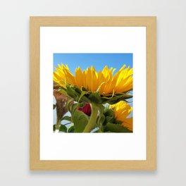 A Summer Bouquet 17 - sunflowers, roses and cockscomb Framed Art Print