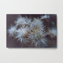 Autumn Miracles Metal Print