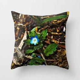 Persian Speedwell 4 Throw Pillow