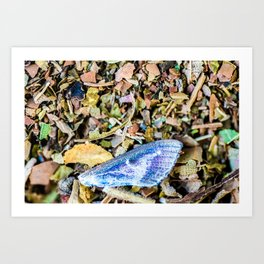 Colorful butterfly wing on compost full frame texture in background Art Print