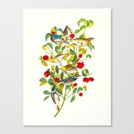 Warbler John James Audubon Scientific Vintage Illustrations Of American Birds Canvas Print