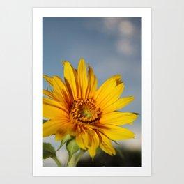 My Sunflower, Julia #6 Art Print
