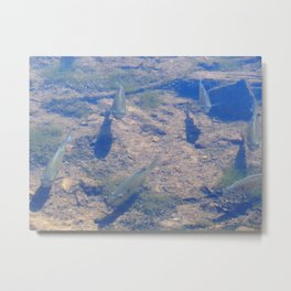 Hanging out at Burke Lake Metal Print