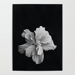 Hibiscus Drama Study - Black & White High Impact Photography Poster