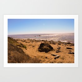 Elephant Seals on the California Coast Art Print