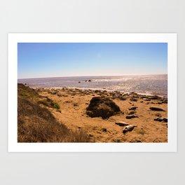 Elephant Seals on the California Coast Art Print