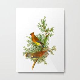 Cedar Waxwing Bird Metal Print