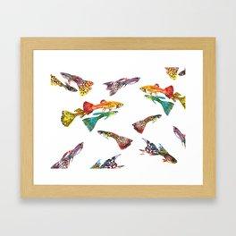 Guppy Aquarium Fish , Aquarium Art Underwater Framed Art Print