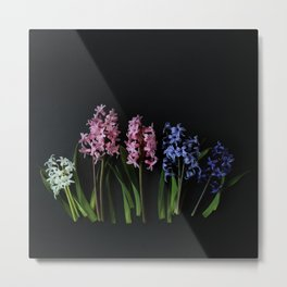 Pink Purple and White Hyacinths Metal Print