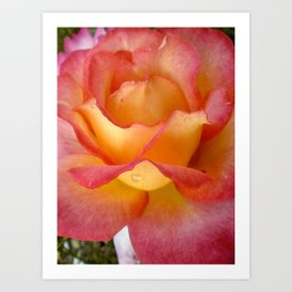 Dew Drop Fire Rose, 2012 Art Print