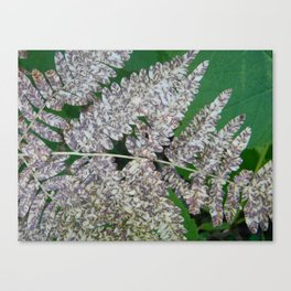 Spotted Fern Canvas Print