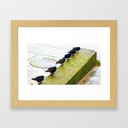 Starlings in a row Framed Art Print