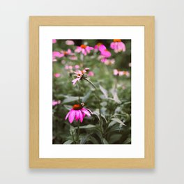 Buzzy Blooms Framed Art Print