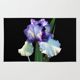 Iris 'Freedom Song' on black Rug
