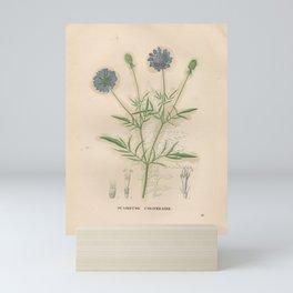Flower scabiosa columbaria2 Mini Art Print