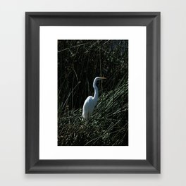 Great White Heron in Reeds Framed Art Print